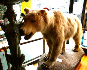 bear pog