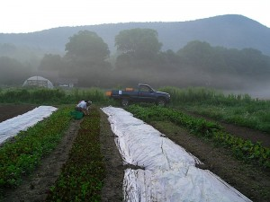 Rural Intelligence: Community: Passages Image