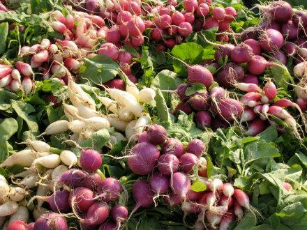 Amenia Farmers' Market