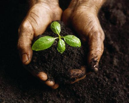 soil10